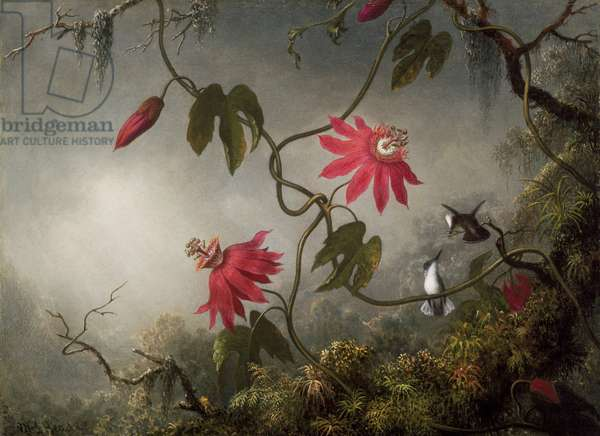 Passion Flowers and Hummingbirds, c.1870-83 (oil on canvas)
