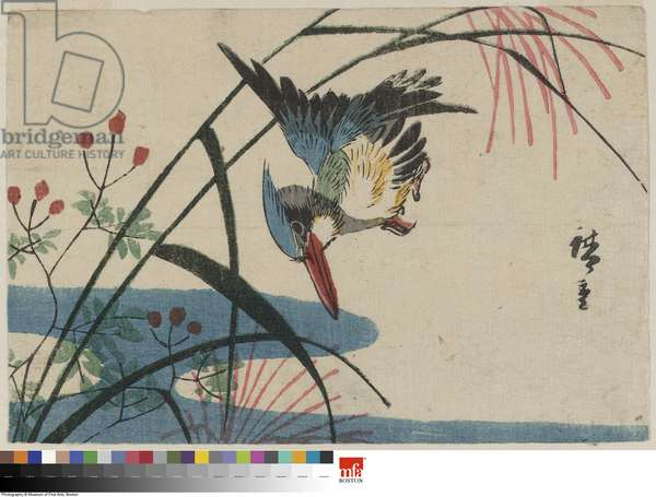 Kingfisher and Pampas Grass (colour woodblock print)