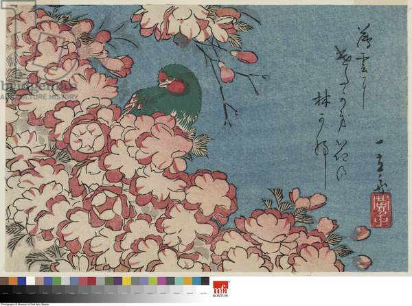 Double Cherry Blossoms and Green Bird (colour woodblock print)