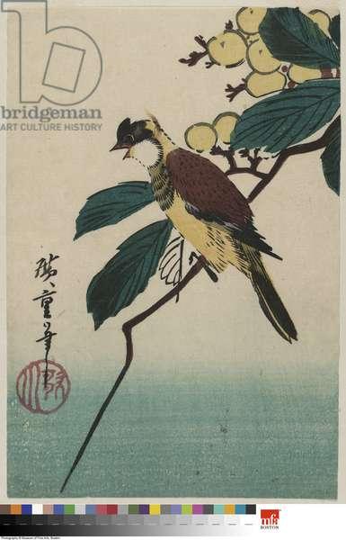 Bird on Loquat Branch (colour woodblock print)