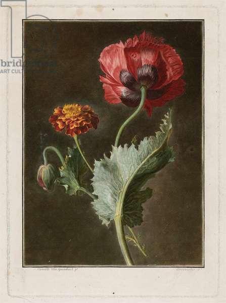 Marigold and Poppy (Oeillet d'Inde et Pavot), c.1780-90 (hand-coloured mezzotint & engraving)