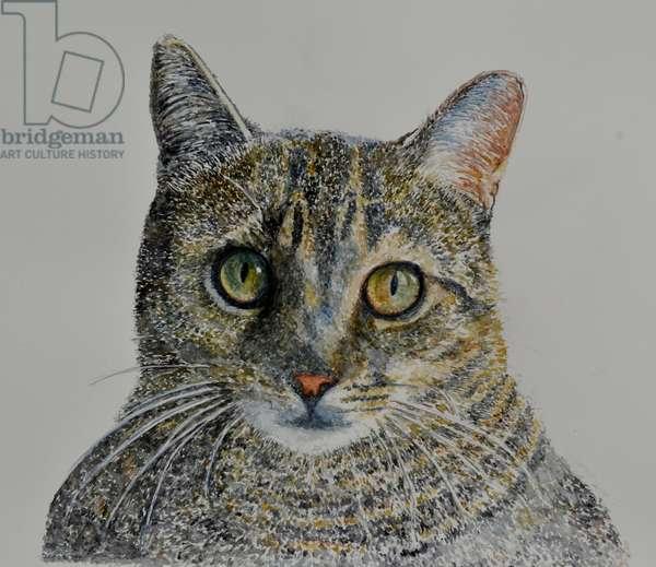 Cat, 2016  ( watercolor)