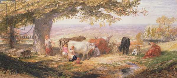 Milking in the Fields