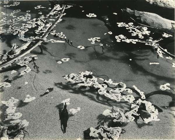 Kelp and Water, Garrapata, 1951 (silver gelatin print)