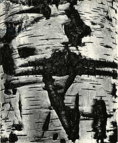 Bark Abstraction, Europe, 1971 (silver gelatin print)