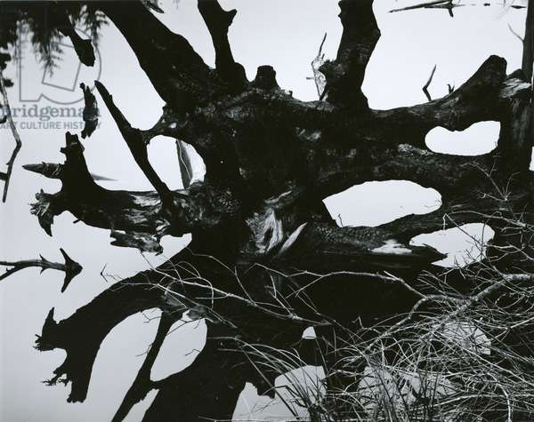 Water and Tree Reflection, 1968 (silver gelatin print)