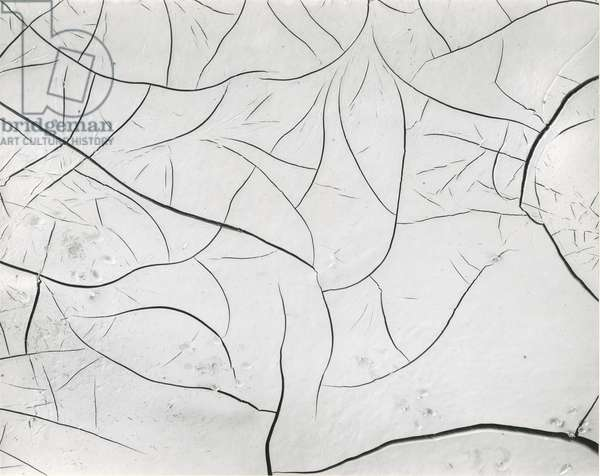 Mud Cracks, 1955 (silver gelatin print)