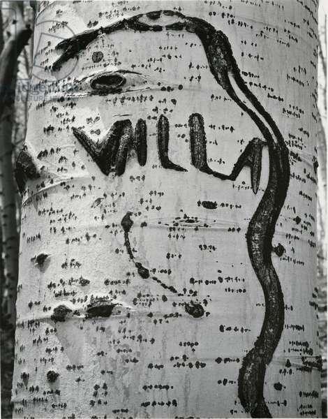 Tree Bark, c. 1970 (silver gelatin print)