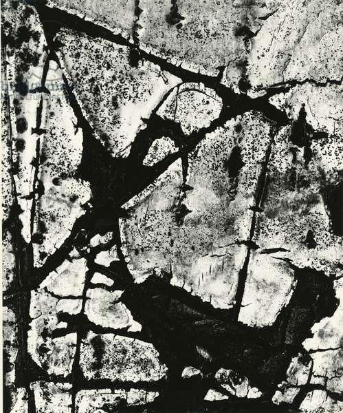 Tree Bark, 1970 (silver gelatin print)