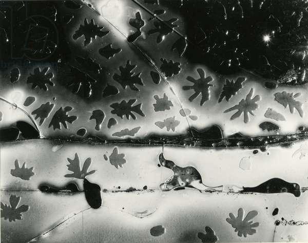 Broken Glass, 1954 (silver gelatin print)