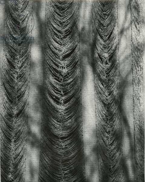 Cloth, c.1950 (silver gelatin print)