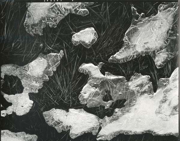 Ice and Grass, High Sierra, California, c. 1950 (silver gelatin print)