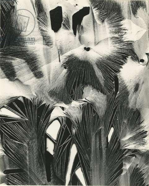 Cracked Plastic Paint, Garrapata, 1954 (silver gelatin print)
