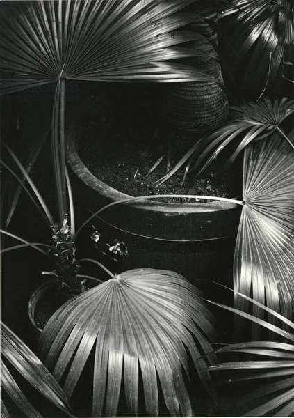 Bronx Botanical Garden, Bronx, New York, 1943 (silver gelatin print)