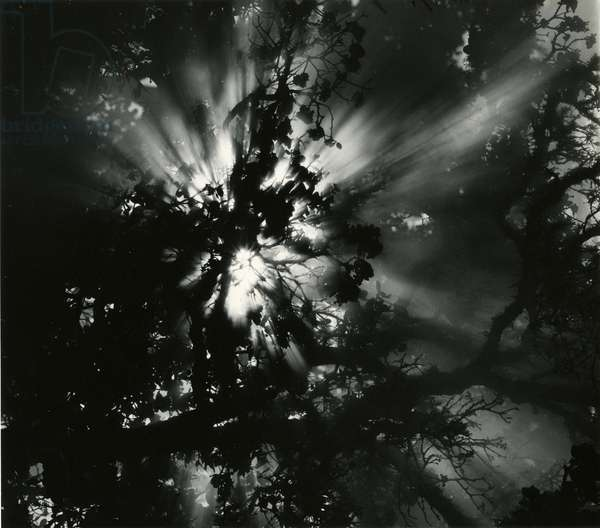 Sunburstm Hawaii, 1978 (silver gelatin print)
