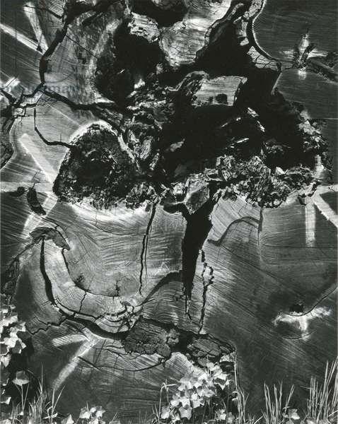 Wood, 1970 (silver gelatin print)