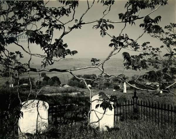 Cemetery and Tree, California, 1955 (silver gelatin print)