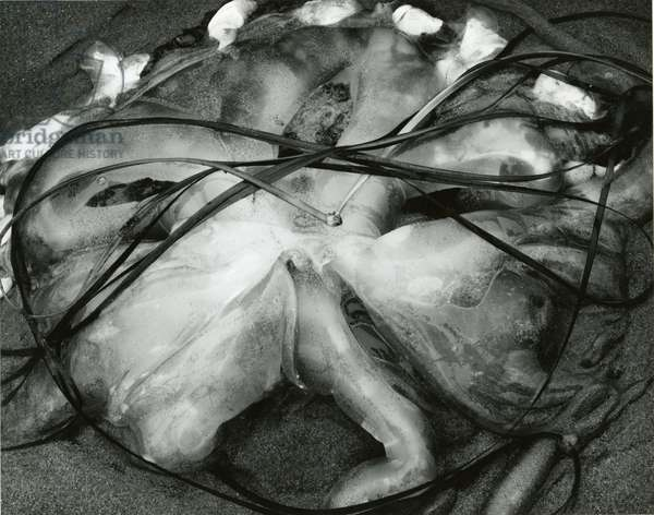 Jellyfish , 1967 (silver gelatin print)