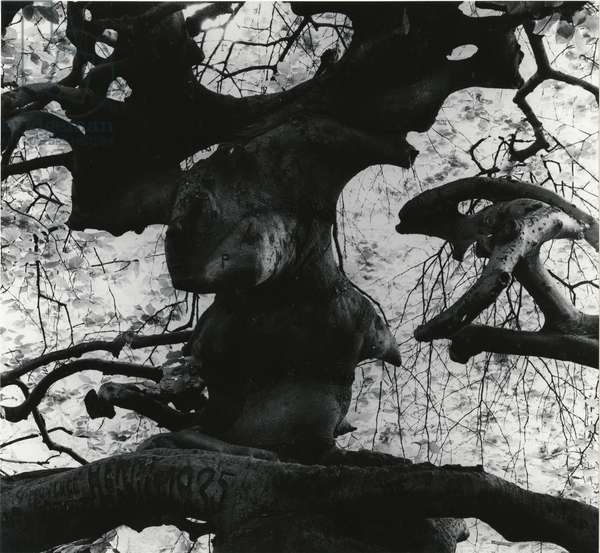Tree, Paris, 1960 (silver gelatin print)