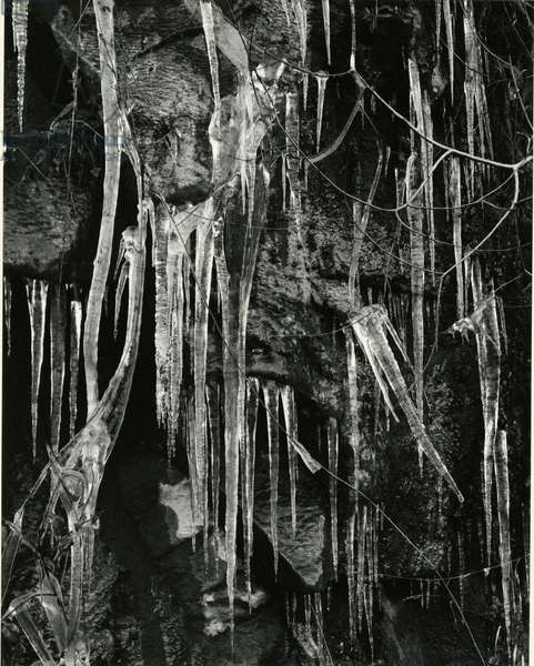Ice and Branch, Oregon, 1971 (silver gelatin print)