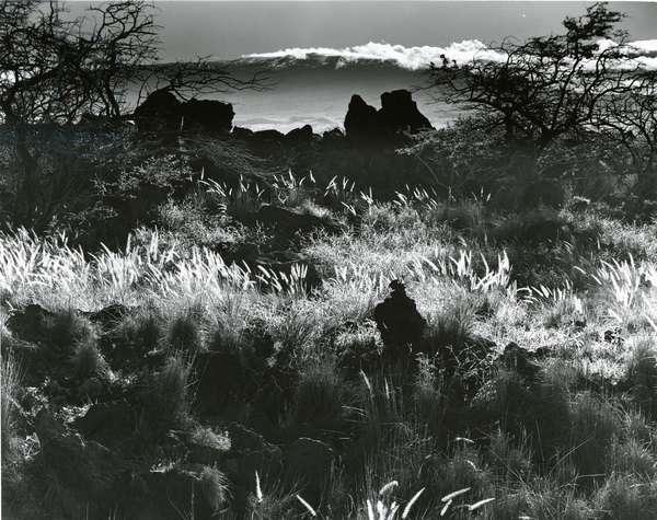 Plants and Landscape, c. 1980 (silver gelatin print)