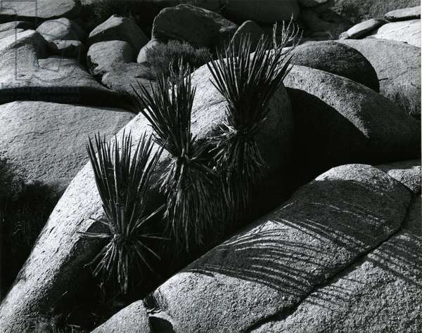 Rock and Plants, Death Valley, California, 1978 (silver gelatin print)
