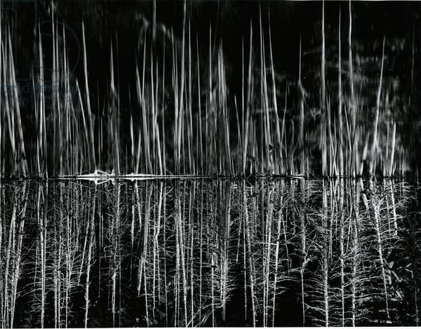 Tree and Water Reflection, High Sierra, c.1960 (silver gelatin print)