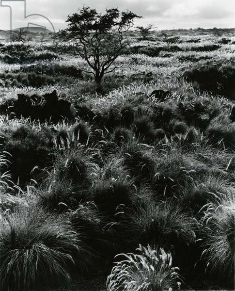 Plants and Trees, Landscapes, c. 1980 (silver gelatin print)