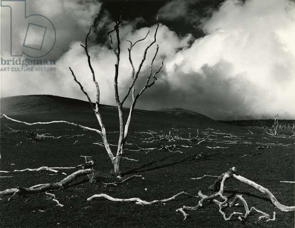 Clouds, Lava, Tree, Hawaii, 1978 (silver gelatin print)