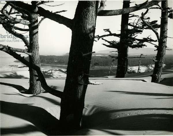 Trees and Dune, Oregon, 1962 (silver gelatin print)