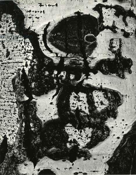 Tree Bark, 1972 (silver gelatin print)