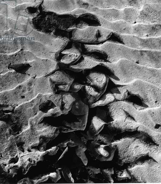 Sand, c.1970 (silver gelatin print)