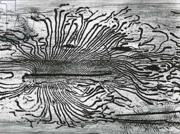 Worm Wood, California, c. 1937 (printed c. 1970) (silver gelatin print)