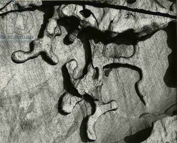 Wormwood, Europe, 1971 (silver gelatin print)