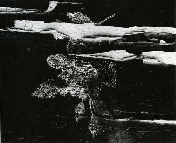 Wood, c. 1970 (silver gelatin print)