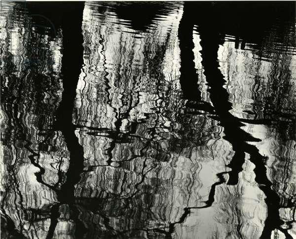 Tree, Reflections, Europe, 1971 (silver gelatin print)