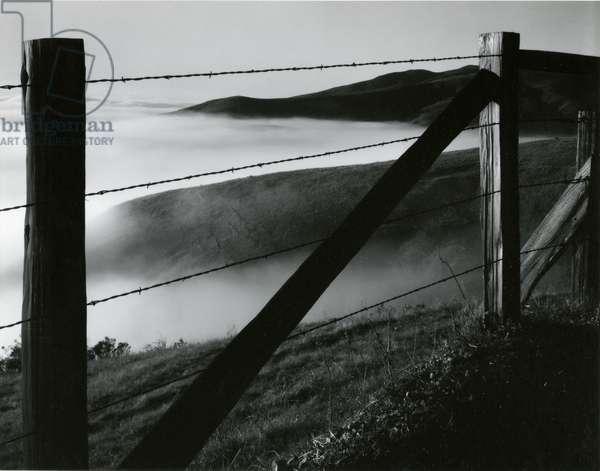 Fence, Big Sur, 1960 (silver gelatin print)