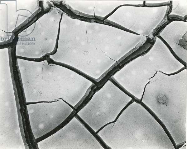 Cracked Mud, High Sierra, California, 1960 (silver gelatin print)