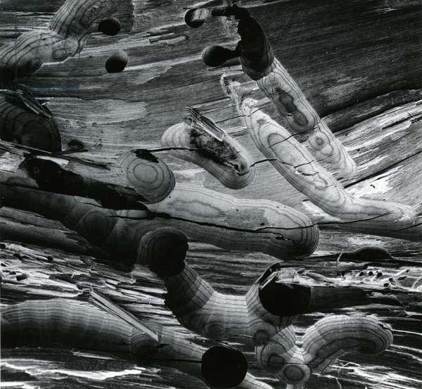 Wormwood, Alaska, 1973 (silver gelatin print)