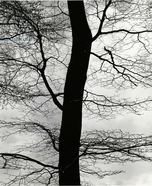 Tree and Sky, Europe, 1971 (silver gelatin print)