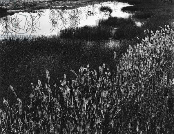 Roadside Pond, California, c. 1970 (silver gelatin print)