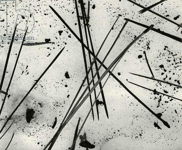 Pine Needles, Oregon, 1972 (silver gelatin print)