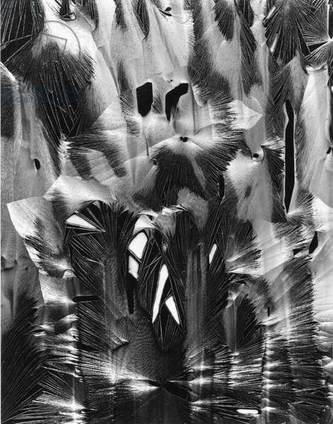 Cracked Plastic Paint, Garrapata, California, 1954 (silver gelatin print)