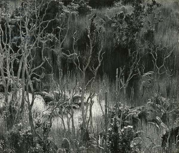 Landscape, Hawaii, 1978 (silver gelatin print)