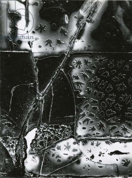 Broken Glass, 1953 (Printed 1981) (silver gelatin print)