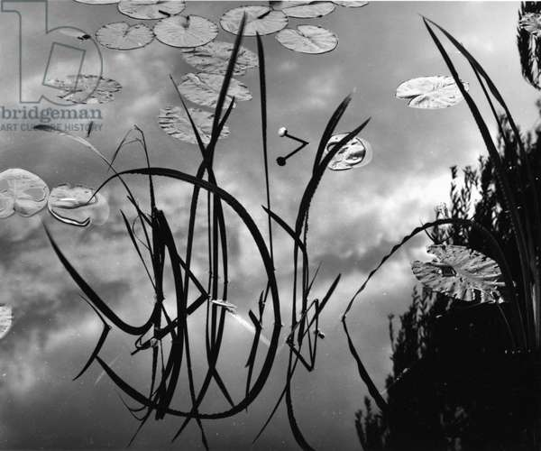 Reeds and Lily Pads, Europe, c. 1970 (silver gelatin print)