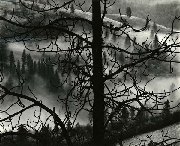 Landscape, Europe, 1968 (silver gelatin print)