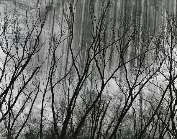 Rock Wall and Trees, Glen Canyon, 1959 (silver gelatin print)