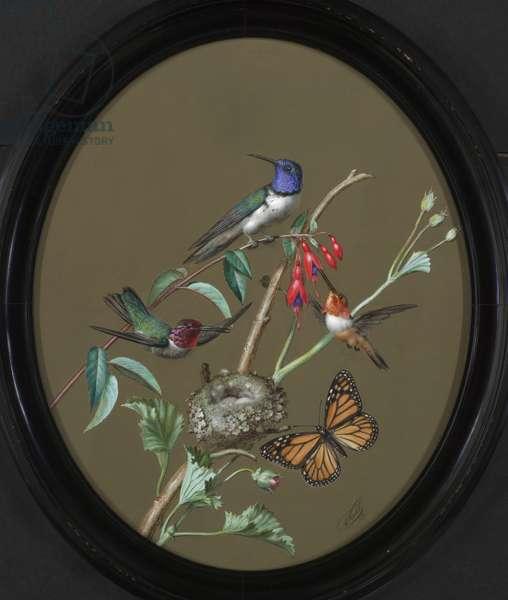 Hummingbirds, 1876 (tempera on paper)