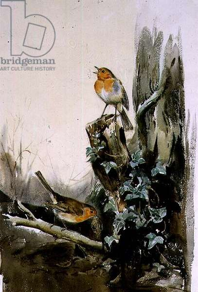 Robins and Ivy (w/c)